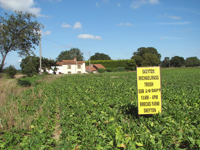 Sugar beet crop by Hillside