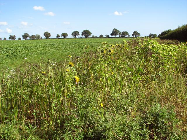 Crop fields east of Lower Farm
