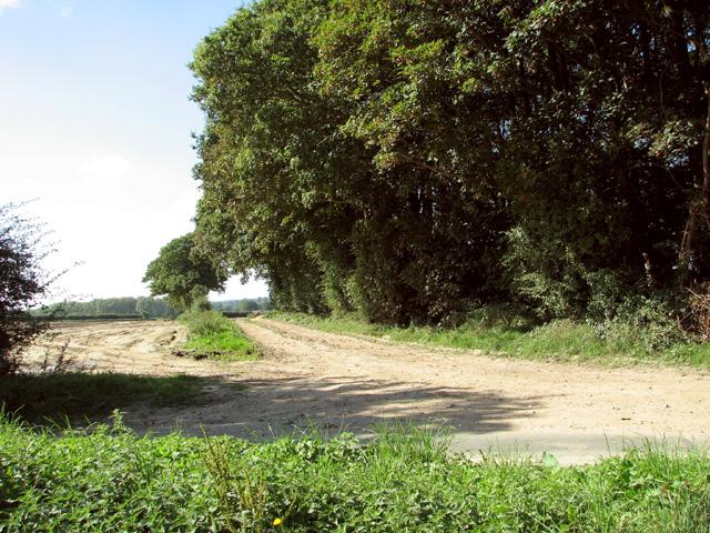 Farm track south of Tuttington Plantation