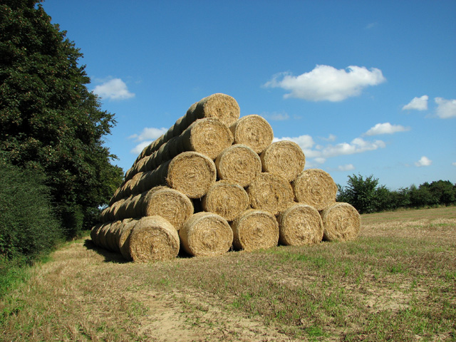Stacked straw bales on a field's edge