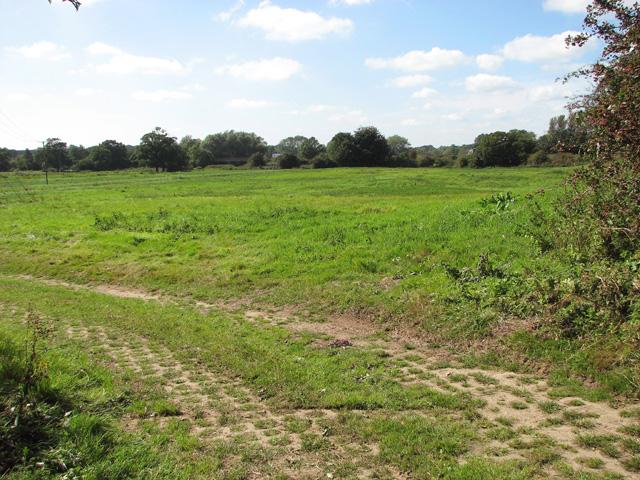Pasture south of Tuttington Road