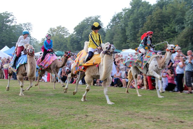 Camel racing at Hole Park