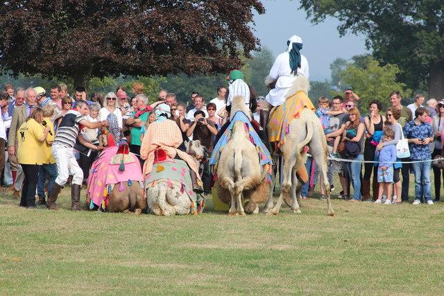 Camel racing at Hole Park