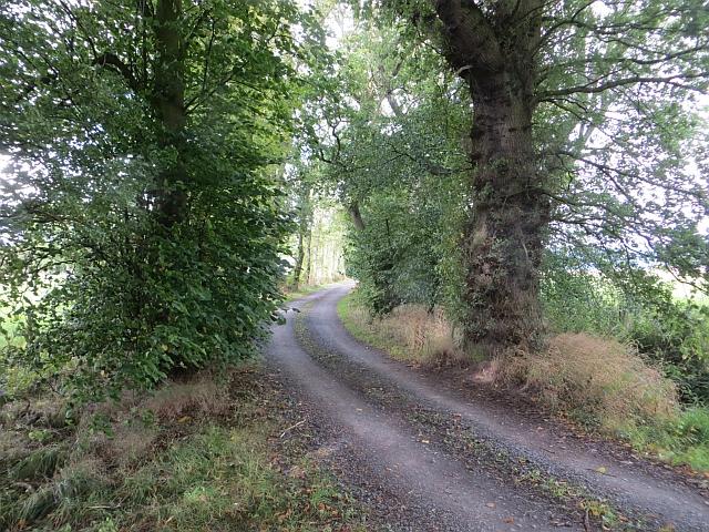 Road near Megginch Castle