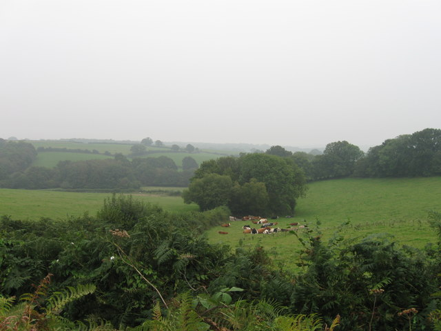 Cows lying down on a murky morning