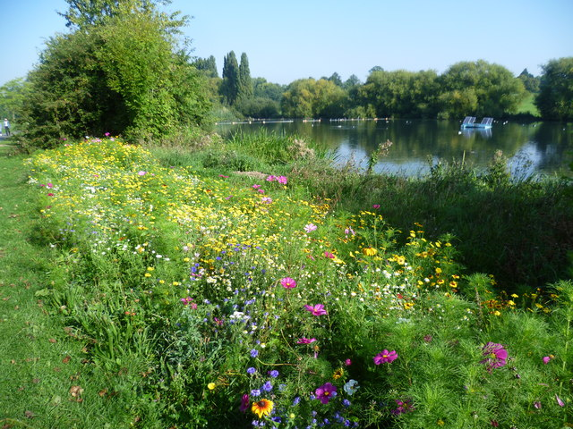 Wildflower meadow in Danson Park