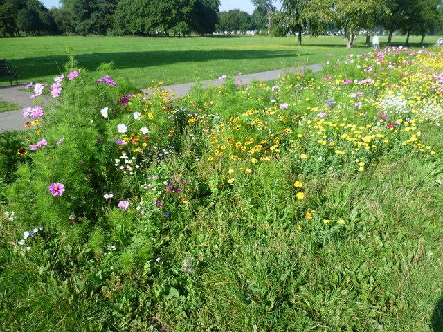 Wildflower meadow in Danson Park