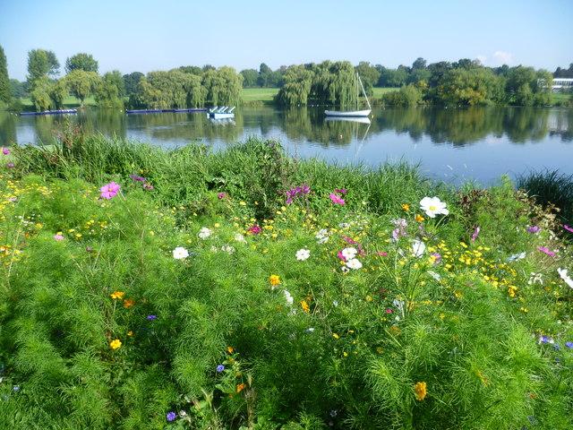 Cornfield annuals by Danson Park lake
