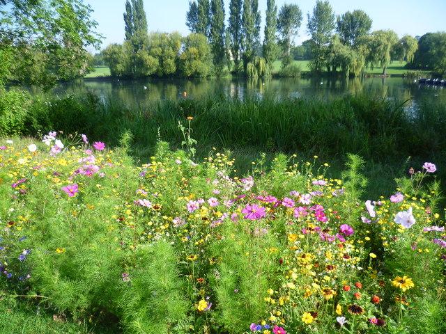 Cornfield annuals and Danson Park lake