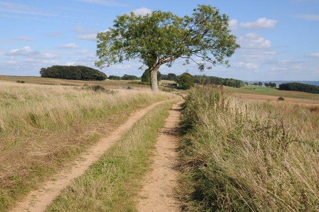 Track and permissive path