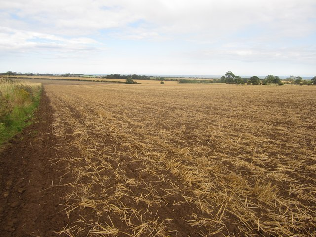 Cultivated arable field near Lesbury