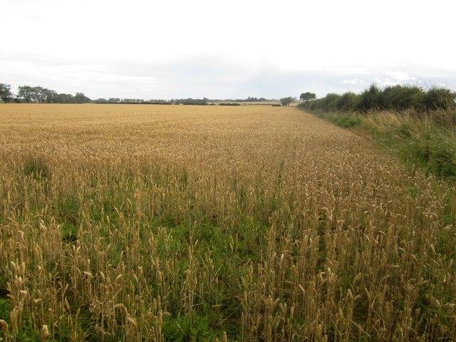 Arable field east of Field House