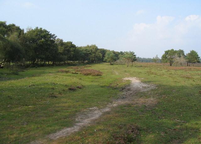 The edge of Beaulieu Heath