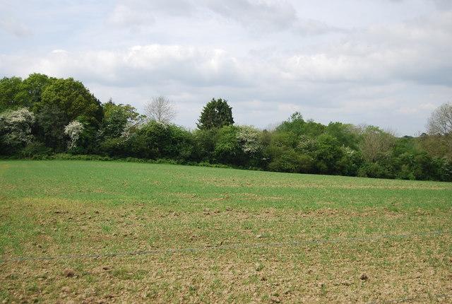 Farmland by Park Lane