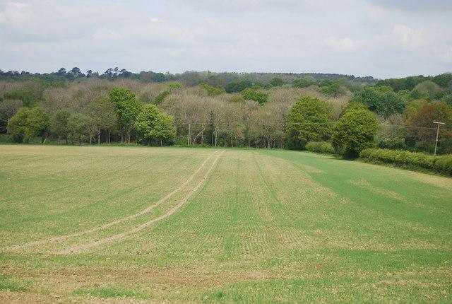 View towards Sherlock's Wood