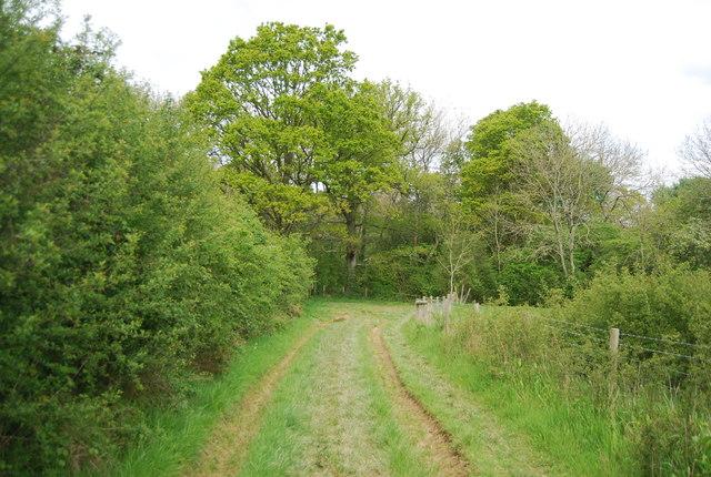 Approaching Sherlock's Wood