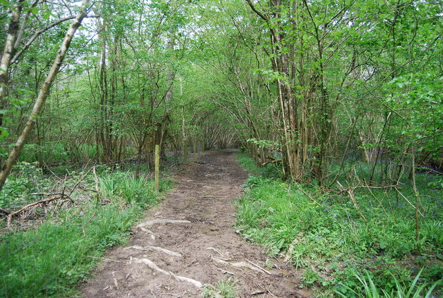 Footpath, Sherlock's Wood
