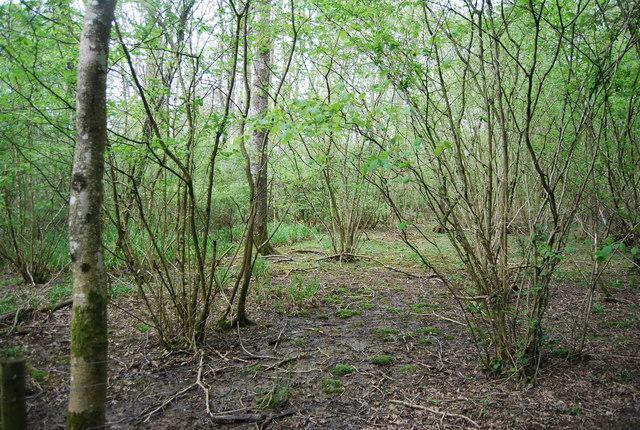 Coppicing, Sherlock's Wood