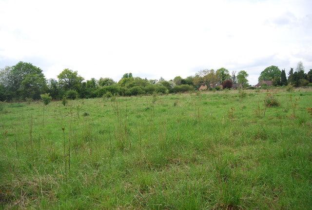 Field by Sherlock's Wood