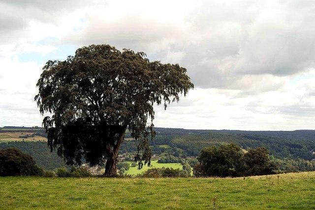 Stanton Moor Tree