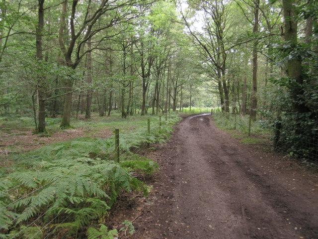 Bridleway in Holt Wood