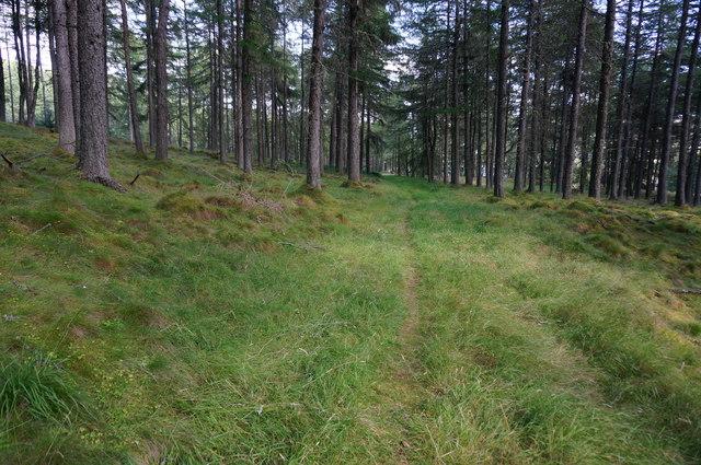 Track in Bruar Wood