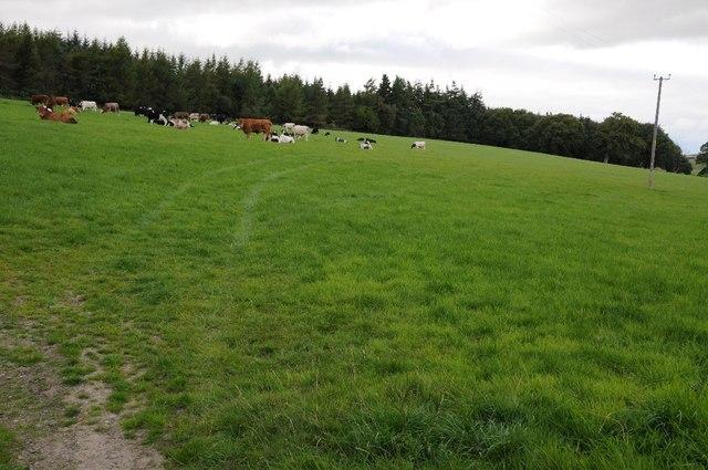 Field opposite The Nursery