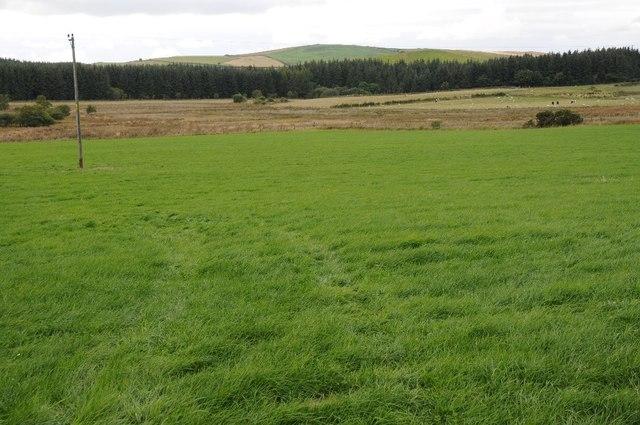 Upland grazing near Wenlli