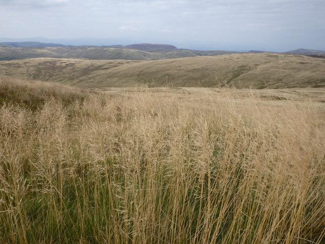 Tall Grass, Ochr Gerrig