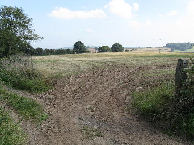 Fieldscape opposite Hidelow Farm's entrance