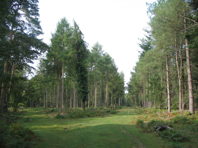 Forest rides, Perrywood Ironshill Inclosure