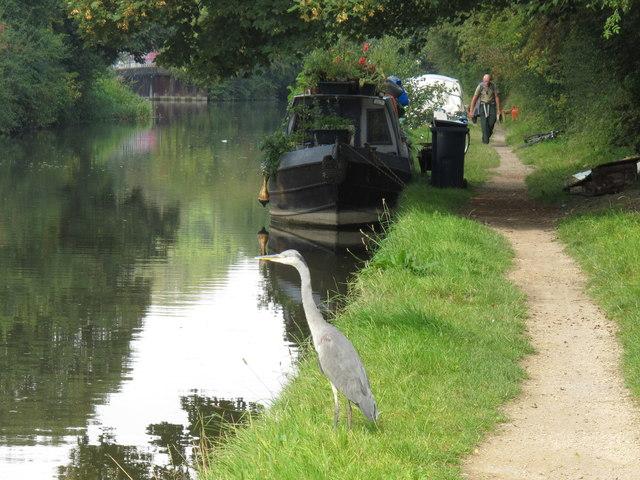 Heron, narrow boat, walker on Grand Union Canal