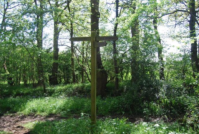 Bridleway junction, Birches Wood