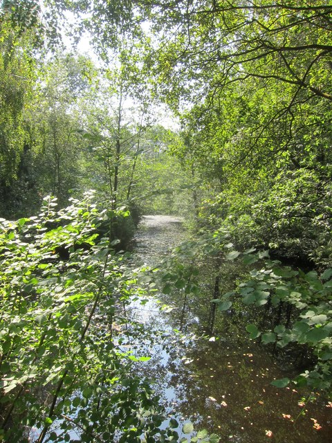 A shady woodland pool in Lord's Wood