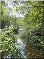 ST6363 : A shady woodland pool in Lord's Wood by Dr Duncan Pepper