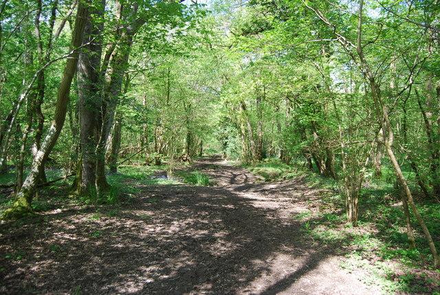 Bridleway, Birches Wood