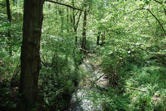 Vann Stream