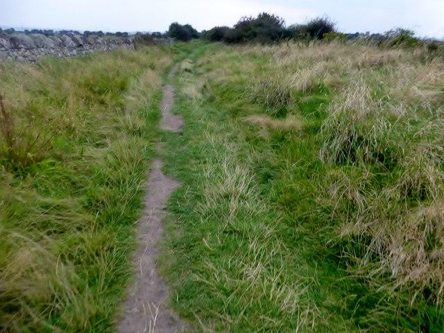 Path Towards St Combs Farm