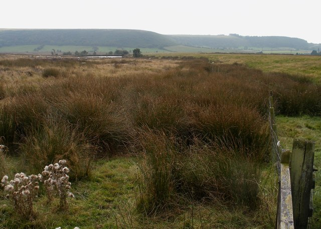 Black Rigg, Saltergate Moor