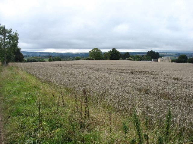 Farmland above Charingworth