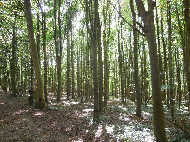 Millbank Woods