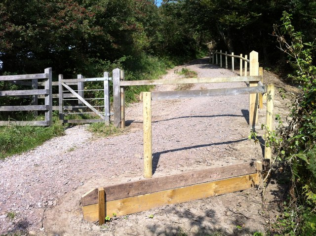 Walks in Langdon Hill Wood