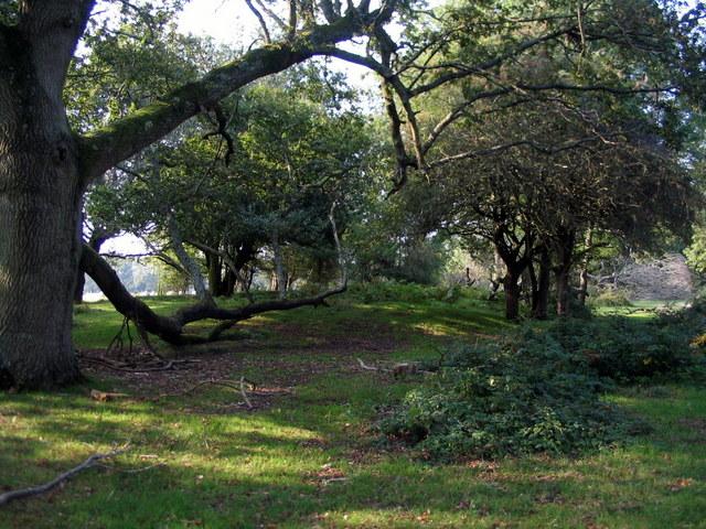 Tumulus at the edge of Beaulieu Heath