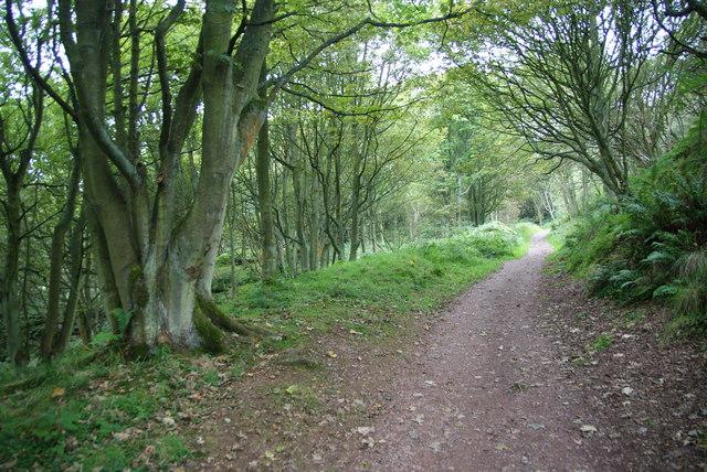 Woodland walk near Ravenscar