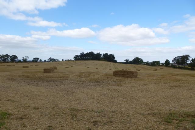 Farmland near Upsettlington