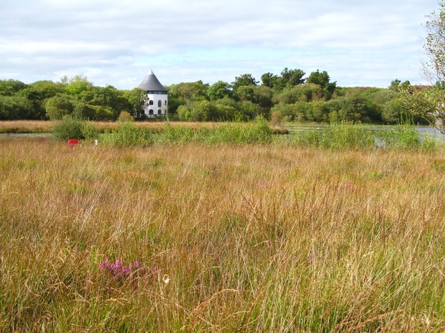 Wetland habitat at Lyn Llech Owain