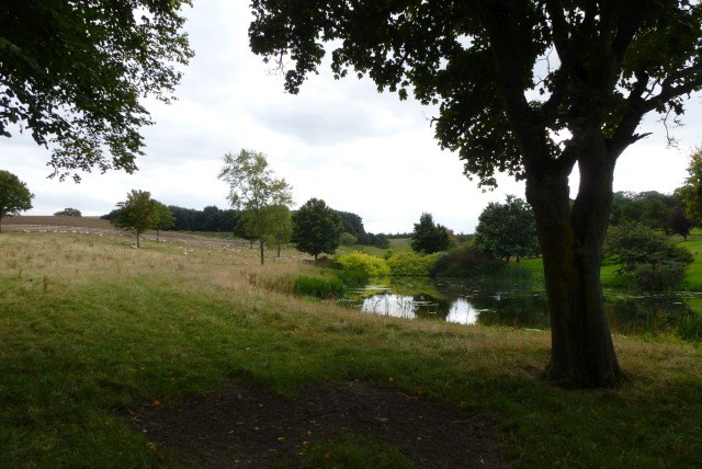 Ponds in East Learmouth