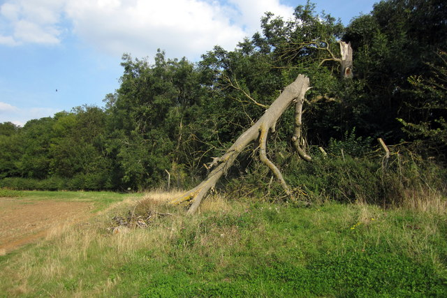 Snapped tree in Druids Grove