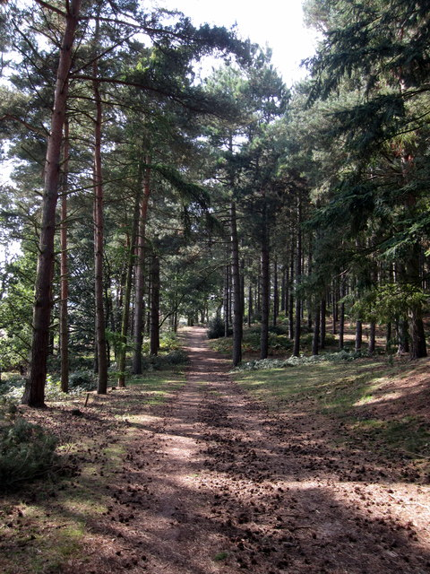 Track through Rowney warren Woods