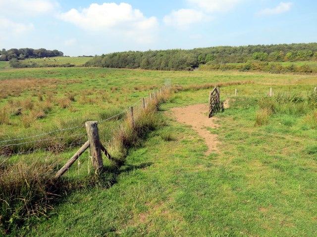 Llwybr wedi ei rhwystro / Obstructed path